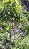 Venta de Terrenos en CORTES, SAN PEDRO SULA